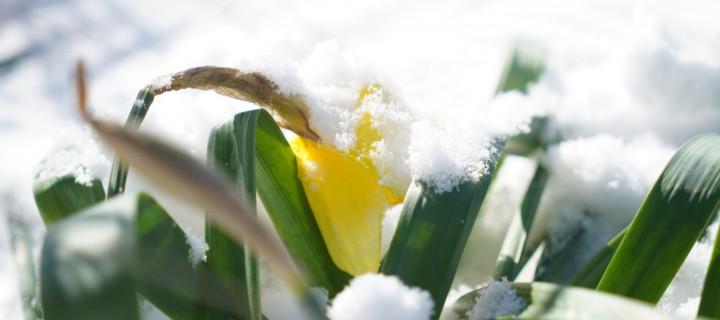 Proljetni snijeg u Studencima